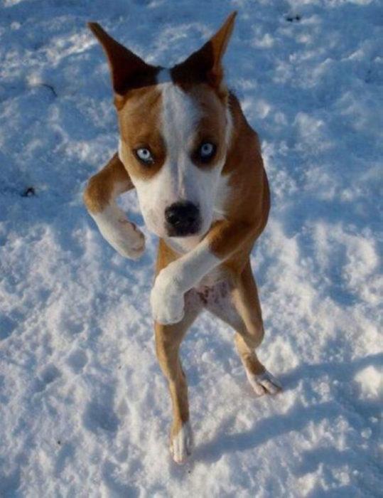 perrito huyendo de la nieve
