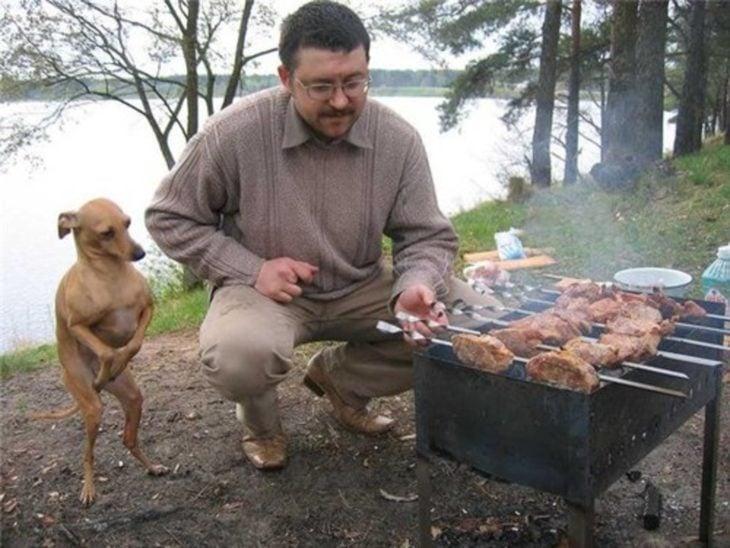 perrito esperando a que le den de comer algo de la parrilla