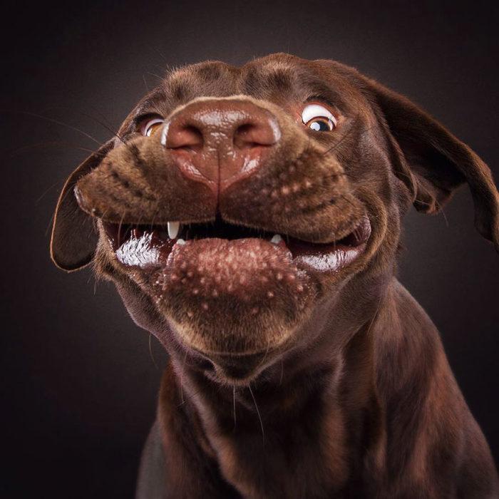 perrito con myuchos bocadillos en el hocico