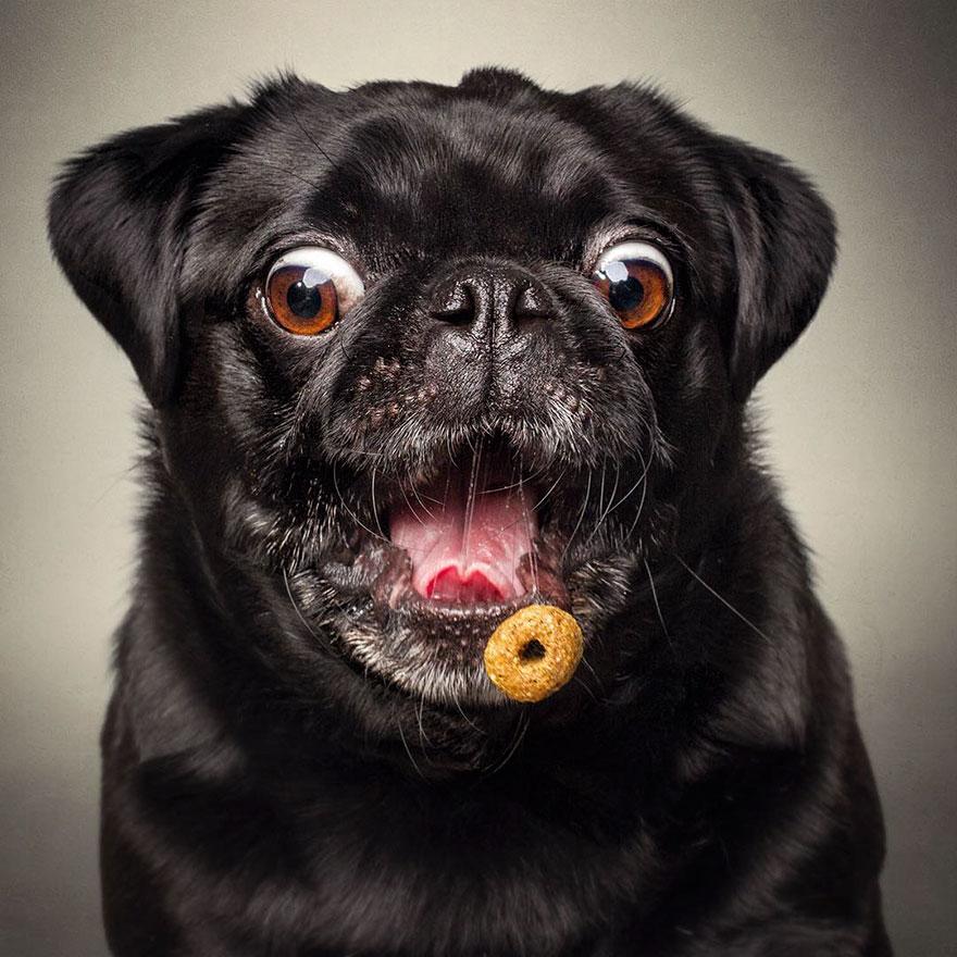 Capt 243 Im 225 Genes Graciosas De Perros Atrapando Bocadillos
