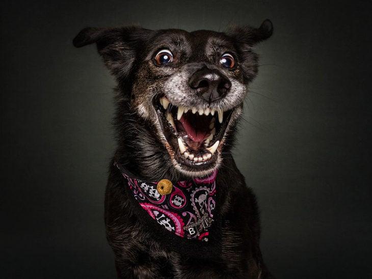 perrito mostrando los dientes