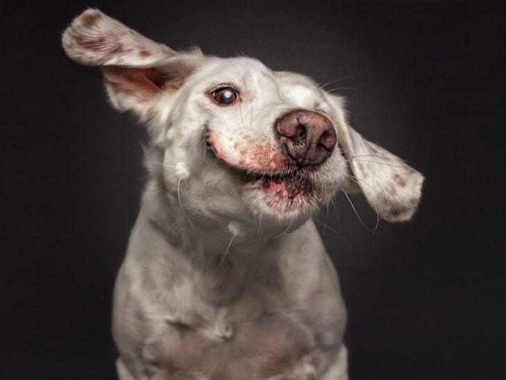 perrito con las orejas levantadas