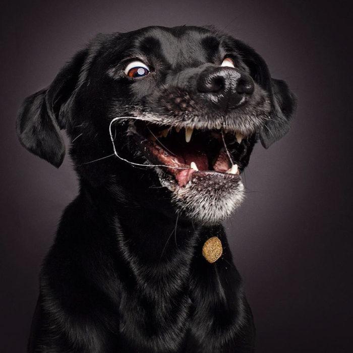 perrito feliz por atrapar un bocadillo