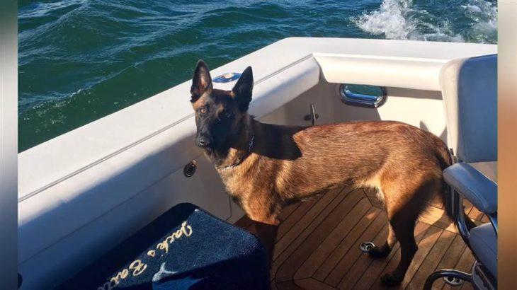 Rylee, pastor belga, de paseo en el bote