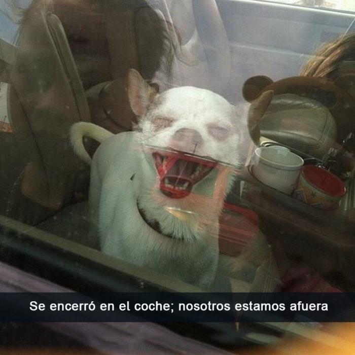 Perros traviesos - Perro sonriendo cuando deja a sus dueños afuera del carro