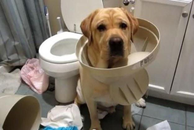 Perros traviesos - Perro con la tapa de la basura atorada en la cabeza