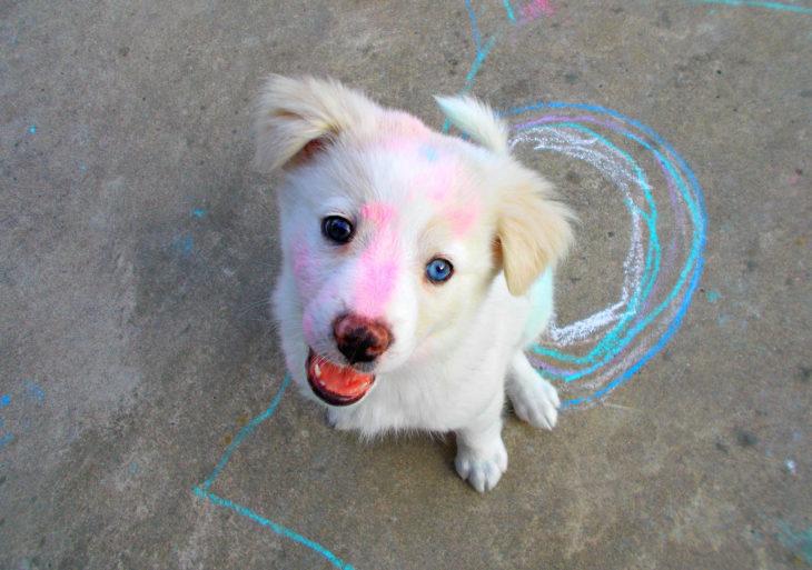 Perros traviesos - perro lleno de crayon