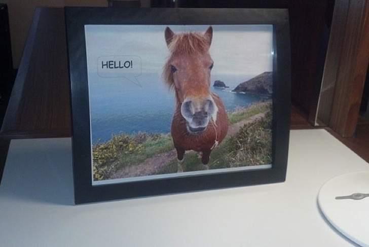 Peticiones absurdas hoteles - Foto de un caballo y la palabra HOLA