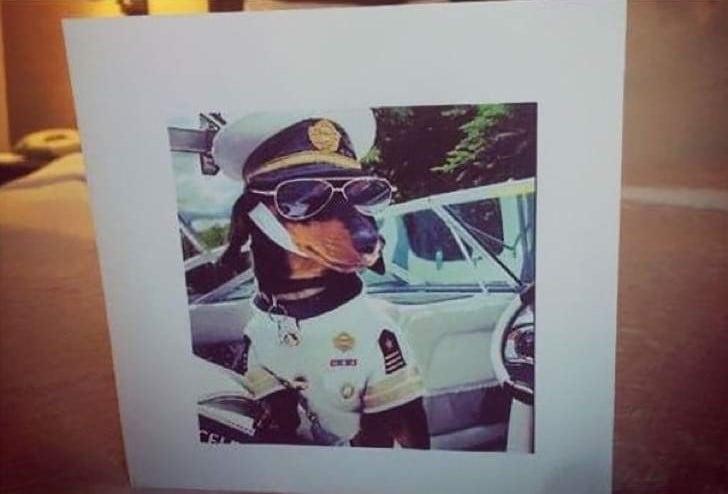 Peticiones absurdas hoteles - Foto de un perro vestido como capitán de barco