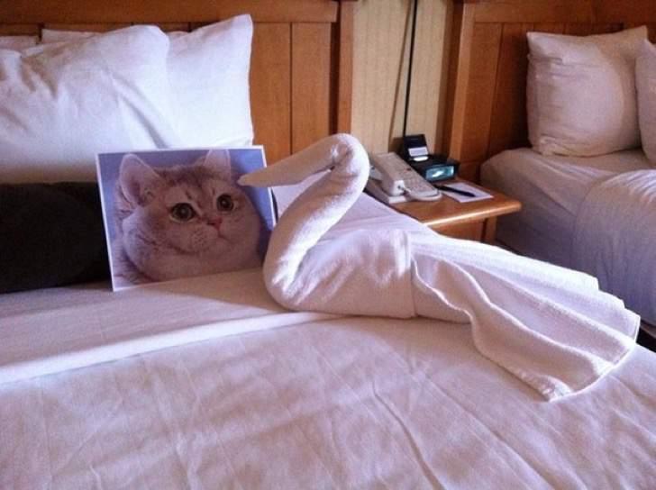 Peticiones absurdas hoteles - Toalla con forma de cisne y foto de un gato