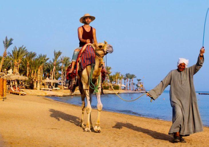 CAMELLO EN DUBAI
