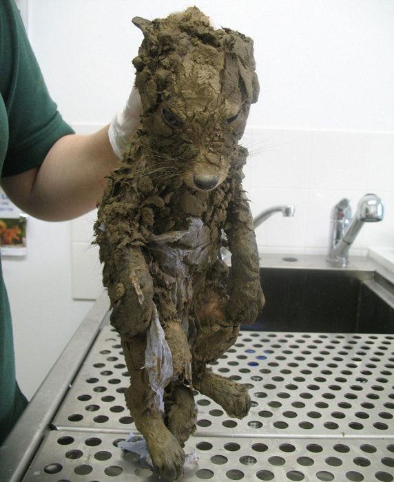 Animal cubierto en lodo, no se sabe què es