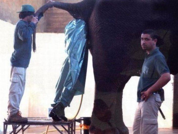 hombre en ano de elefante
