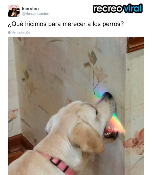 perro mordiendo la pared