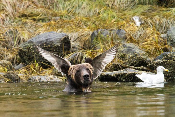 oso con pájaro en la cabeza