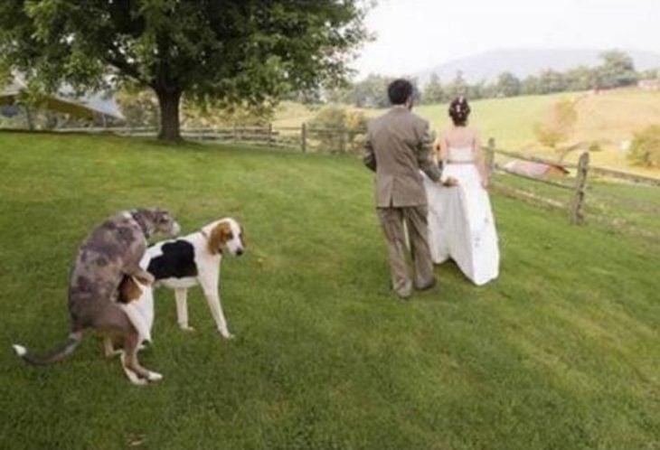 perros montados al lado de pareja de novios