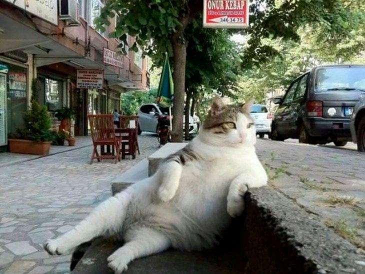 gato recostado en banqueta
