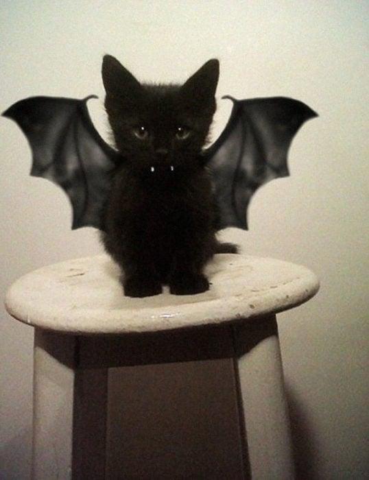 gatito con alas de murciélago