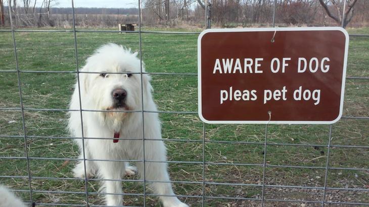 perro detrás de una reja