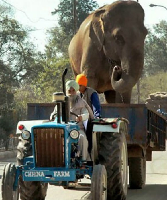 hombres transportando a elefante en un vehículo