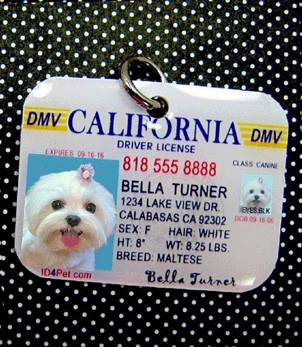identificación de perro