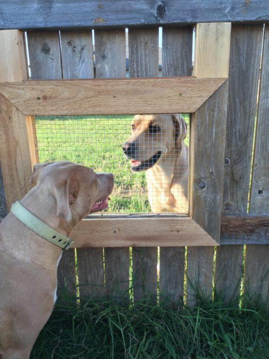 perros se ven a través de ventana