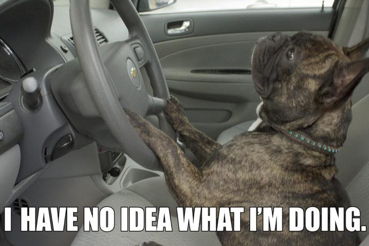 perrito al volante