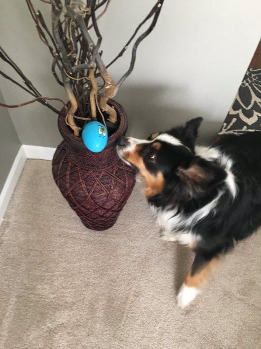 perro encuentra huevo de pascua
