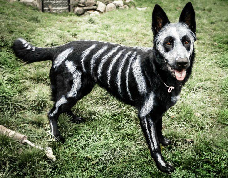 perro disfrazado como calabera
