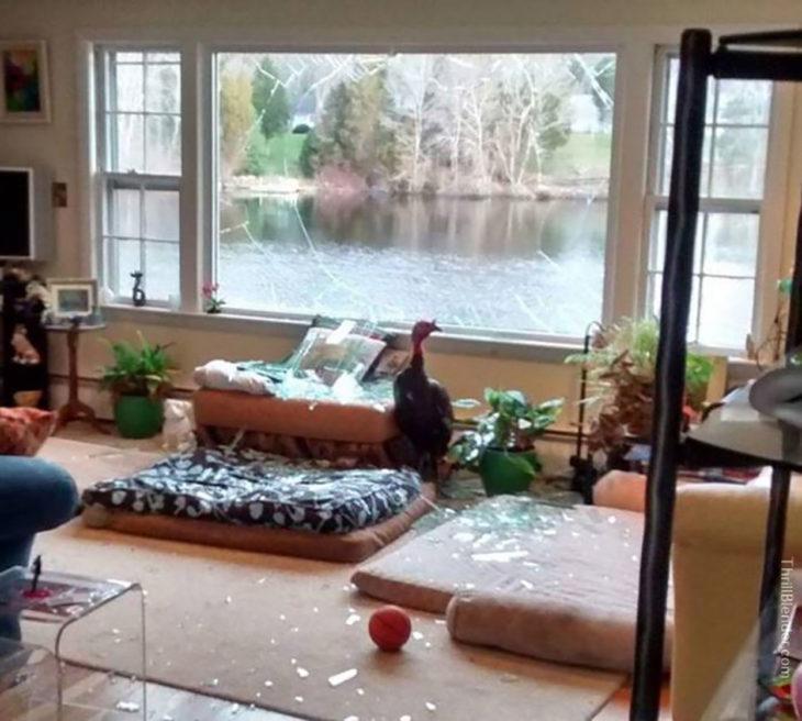 habitación desordenada con un pavo dentro
