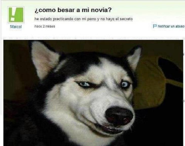 imagen de un perro en pregunta de yahoo respuestas