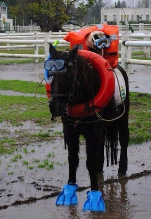 perro vestido de buzo arriba de un caballo