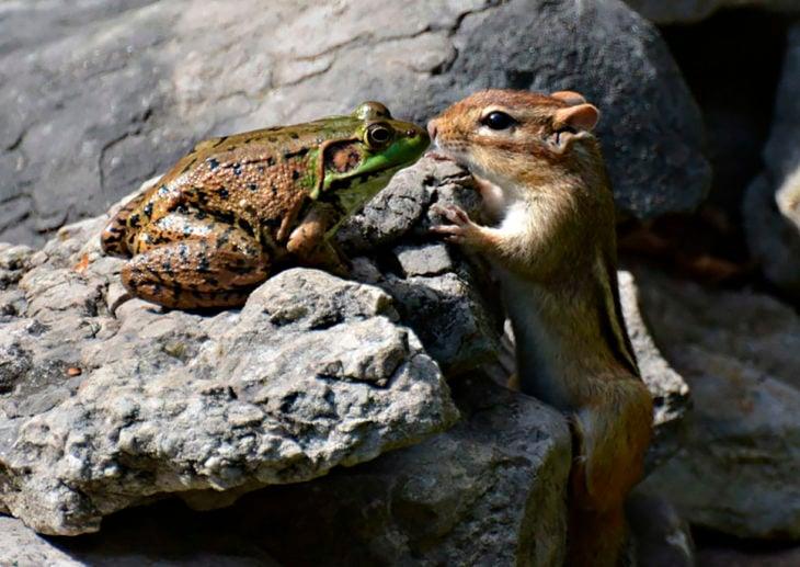 ardilla besando una rana