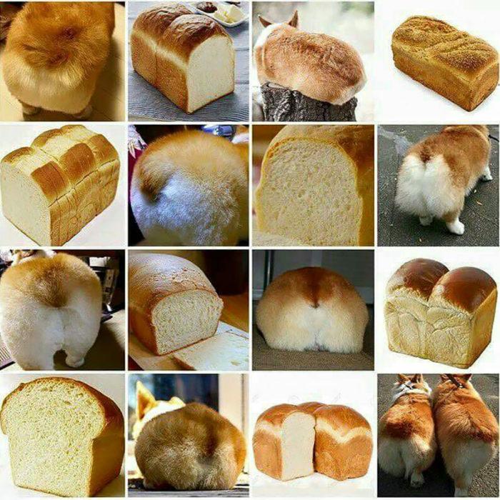 trasero de cachorro y pan blanco