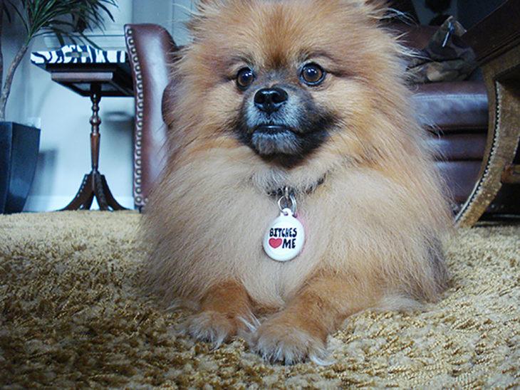 perro pequeño con collar