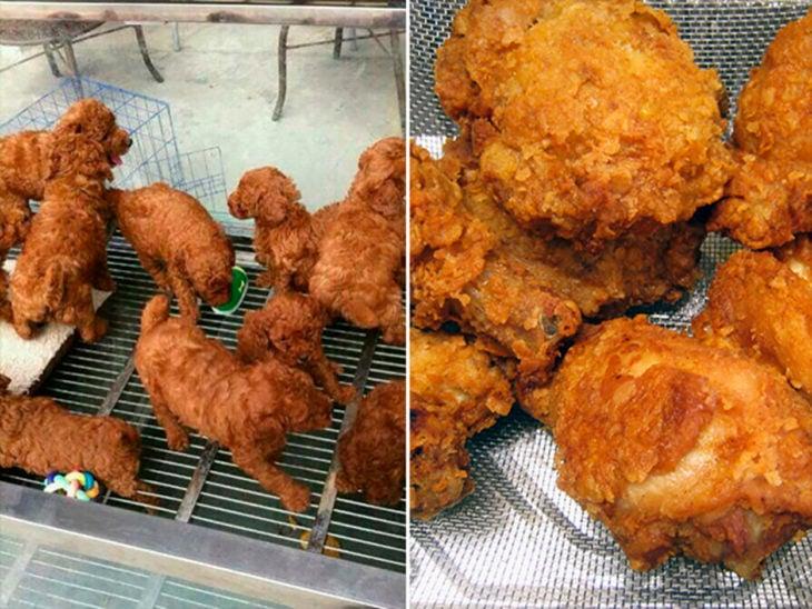 cachorros y pollo frito