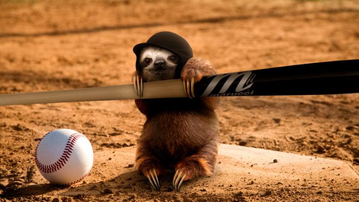 perezoso como jugador de béisbol