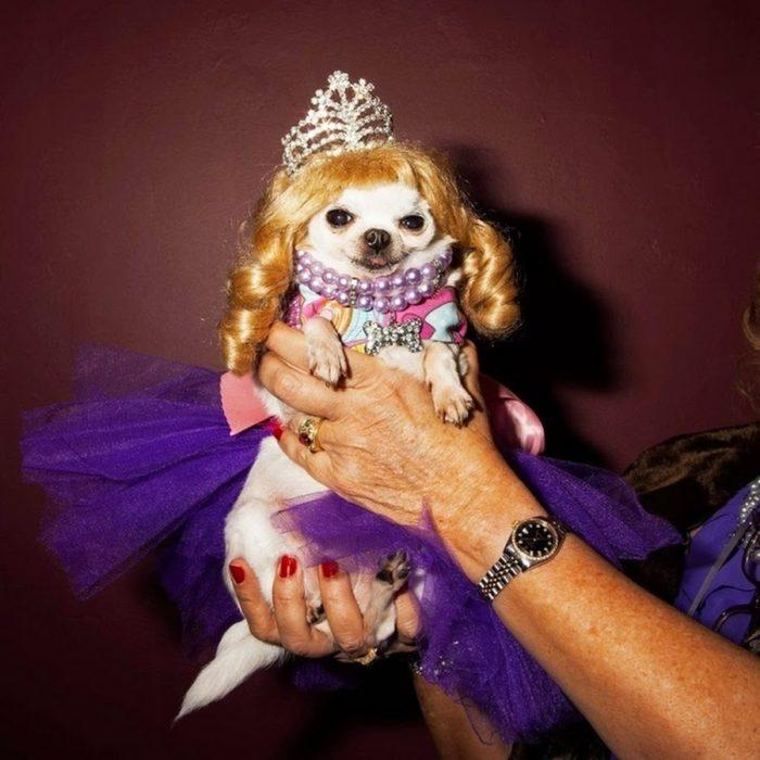 perrita vestida de princesa