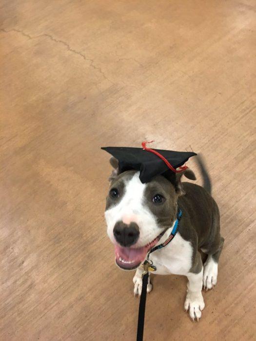 perro con sombrero de graduado