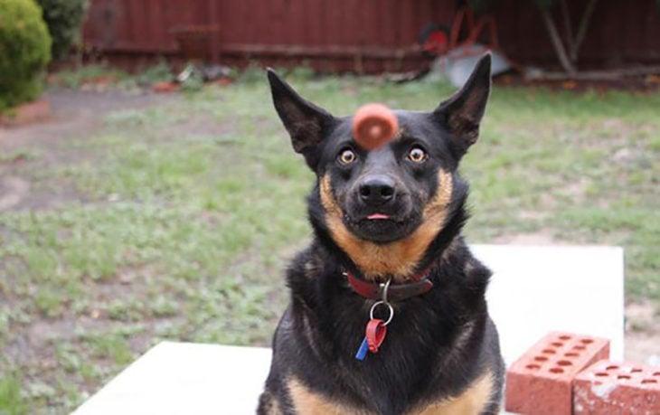 perro asustado porque va hacia él una pelota