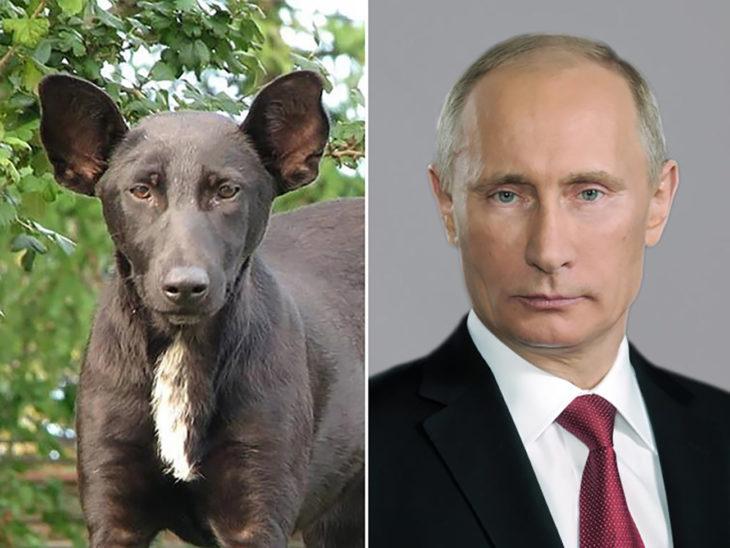 perro que se parece a vladimir putin