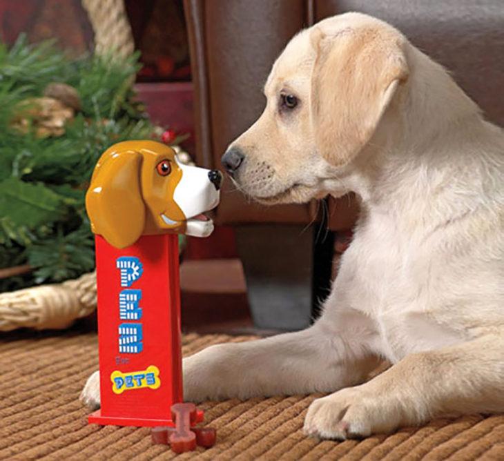 dispensador de bocadillos para mascota