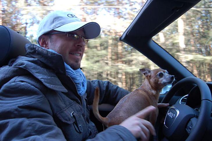 perro chihuahua al volante