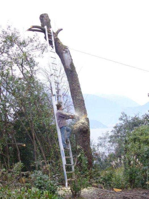 señor en escalera cortando un árbol que es el soporte de su escalera