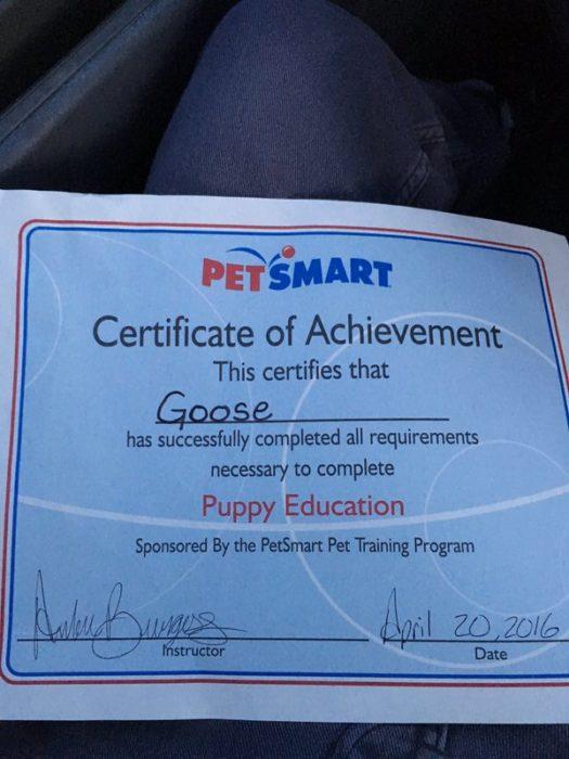 certificado de conducta perro