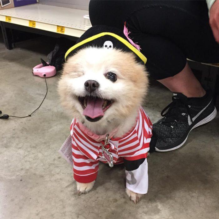 perrito disfrazado de pirata