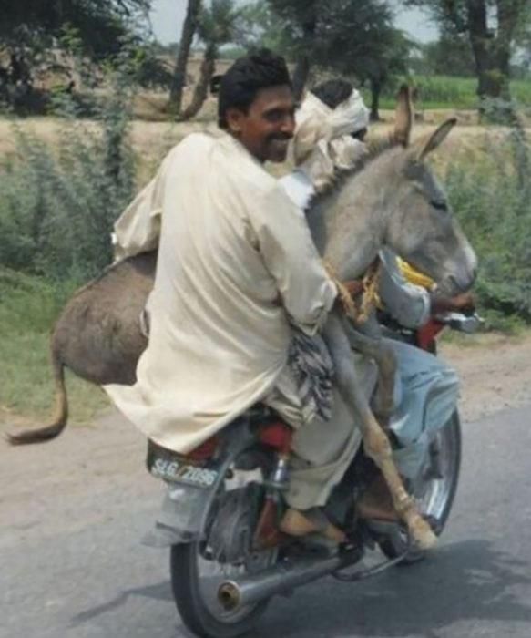 señor llevando su burro en una motocicleta