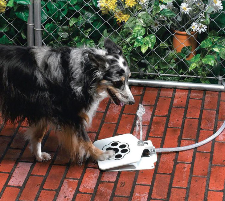 Fuente de pedal para mascota