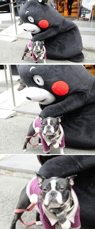 perrito con una botarga rara