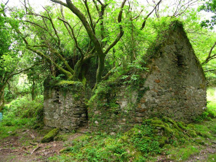 Casa abandonada en el bosque